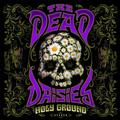 DEAD DAISIES: HOLY GROUND (LTD. COLOURED) - 2LP